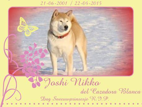 Joshi Nikko del Cazadora Blanca